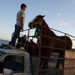 Noe, a local boy from Asuncion, brought his beloved horse with him when visiting Finding the Good at San Roque beach.