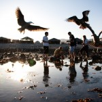 Seagulls flock around the students while gutting fish in Bahia de Los Angeles (Bay of the Angels), one of the final destinations in Baja California.